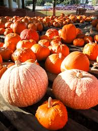 Orlando Pumpkin Patch by Top 15 Fun Fall Activities In The Tampa Bay Area