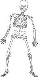 Skeleton Coloring Page Or Digital Stamp