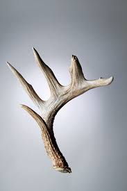 Shed Hunting Utah 2014 by Bone Guide How To Estimate The Price Of Shed Antlers Outdoor Life