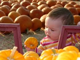 Faulkners Pumpkin Patch by Southern California Pumpkin Patches U2013 Orange County Register