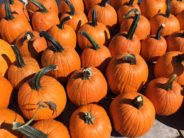 Norms Pumpkin Patch 2015 by Pumpkins Can Be Used To Make Smoothies Pies Breads More