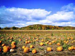 Pumpkin Patch Massachusetts by 10 Spots To Carve Out Time To Pick A Pumpkin Ziptopia