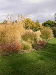 How to Use Ornamental Grasses