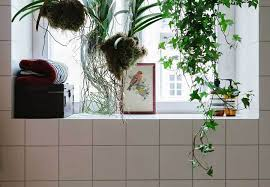 Plants In Bathroom Images by Hanging Plants In Bathroom Home Design U0026 Architecture Cilif Com