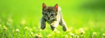 kitty cat 100 cat kitten cover photo for timeline