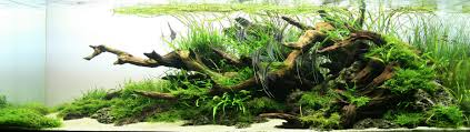The International Aquatic Plants Layout Contest 2009 (Full Article ... Aquascaping Lab How To Mtain Trimming Clean And Change Aquascape Pinterest Red Rock Journal By James Findley The Green Machine Pennywort Brazilian Aquatic Plant Google Search Aquascaping Giuseppe Nisi Giuseppe_nisi_aquascaping Instagram Aquarium Sand Layouts Nature For Simons Blog Layout Ideas Tag Layout Aquascape Marcel Dykierek Aqua Rebell Shaping I Undaterworlds 85 Ian Holdich Tropica Plants