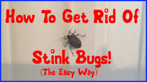 How To Get Rid Of Stink Bugs - YouTube How To Keep Mosquitoes Away Geting Rid Of Five Tips For Getting Bugs And Pests On Your Patio Youtube To Get Chiggers Skin Body Yard Symptoms Fast Crawly Catures In My Backyard Alberta Home Gardening 25 Unique Rid Spiders Ideas Pinterest Kill Off Bug Control I Repellent Spiders Spider Spray Sprays Cutter 16 Oz Outdoor Foggerhg957044 The Of Time Tested Bob Vila Pictures With Japanese Beetles Garden Best Indoor Mosquito Killers Insect Cop