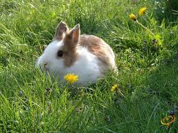 Can Rabbits Eat Roasted Pumpkin Seeds by Which Plants Do Bunnies Cats Dogs And Chickens Like To Eat