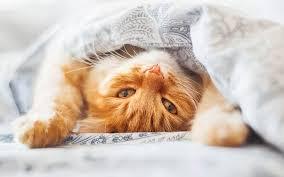 orange cat names cat names 150 hilarious ideas for naming your kitten