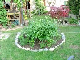 pivoine herbacee en pot balade dominicale au jardin