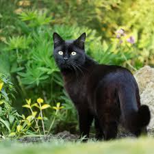 katzenkot im garten katzen tierfreundlich vertreiben so