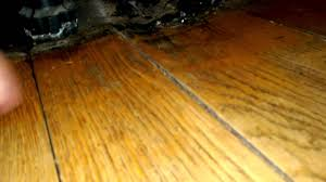 Buckled Wood Floor Water by Warped Floorboards Youtube
