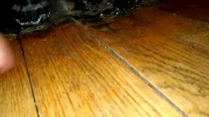 Laminate Wood Floor Buckling by Warped Floorboards Youtube