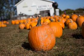 Pumpkin Picking Riverhead by 31 Days 31 Things To Do On The North Fork In October