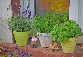 mückenschutz diese pflanzen vertreiben mücken mein