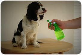 repulsif chien pour canapé repulsif chien canapé best of repulsif canapé 100 images galerie de