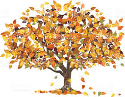 Autumn Tree with some of it s Leaves Falling to Ground royalty free autumn tree with