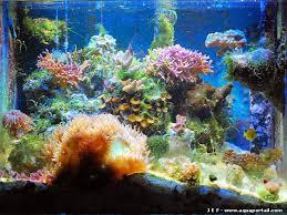 aquarium nano eau de mer eau de mer nano recif