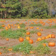 Jacksonville Nc Pumpkin Patch by Mike U0027s Farm U0026 Country Store 91 Photos U0026 78 Reviews Southern