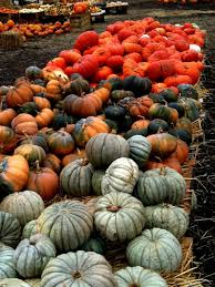 Bengtsons Pumpkin Patch Homer Glen Il by 190 Best Pumpkin Festivals Images On Pinterest Pumpkins Pumpkin