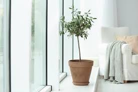 pflanzen für den wintergarten unsere top 15 plantura