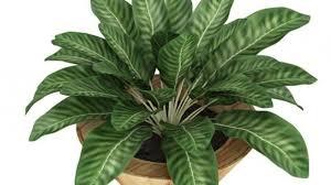 plante de bureau cette plante de bureau ne tue pas un enfant en une minute