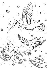 A Group Of Hummingbird Coloring Pages