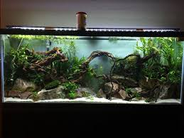 203 best Aquarium Setups images on Pinterest