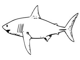 Great White Shark Coloring Page Free Printable Pages For Kids Book