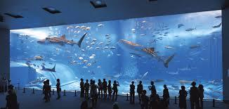 aquarium geant a visiter belgique kuroshio sea at the okinawa churaumi aquarium places to visit