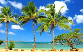 Beach Palm Tree HD Wallpaper Free Download