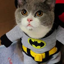 cat batman costume cat quickgone