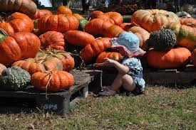 Free Pumpkin Patch In Katy Tx by Things To Do In Houston Today And This Weekend With Kids