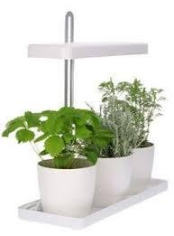 kräuter selbst pflanzen gesund aber richtig