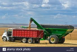 Grain Cart To Truck Stock Photo: 152437540 - Alamy 1949 1953 Chevrolet 2 12 Ton Grain Truck 1983 Ford F700 Sa Grain Truck 1940 32500 Classic Cars In Plano Dont 1959 C60 Farm For Sale Havre Mt 9274608 Intertional Loadstar V12 Fs2017 Farming Simulator Man 26364 Grain Trucks For Sale From Lithuania Buy Truck Wk13556 Trucks Simulator 2017 Lot 1078 1965 Intertional Fleetstar 1900 Lvo Fh16 1974 Gmc Model 6000 Huggy Bears Consignments Appraisals 1854 Truck19812 Stewart Farms Mi