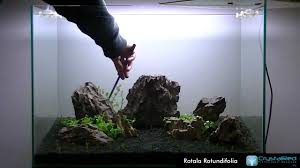 Aquascaping Step By Step - YouTube Photo Planted Axolotl Aquascape Tank Caudataorg Suitable Plants Aqua Rebell Tutorial Natures Chaos By James Findley The Making Aquascaping Aquarium Ideas From Aquatics Live 2012 Part 4 Youtube October 2010 Of The Month Ikebana Aquascaping World Public Search Preserveio Need Some Advice On My Planned Aquascape Forum 100 Cave Aquariums And Photography Setup Seriesroot A Tree Animalia Kingdom Show My Our Lovely 28l Continuity Video Gallery Green 90p Iwagumi Rock Garden Page 8