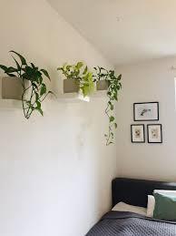 bedroom schlafzimmer efeutute hängepflanze pfla