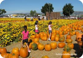 El Paso Pumpkin Patch by Halloween Y El Pumpkin Patch