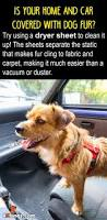 Dogs That Shed Hair by Best 25 Dog Hair Removal Ideas On Pinterest Diy Household Tips