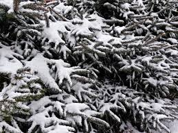 Free Images Landscape Nature Forest Branch Snow Winter