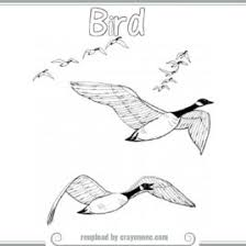 Bird Migration Coloring Pages