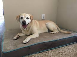Top Rated Orthopedic Dog Beds by 11 Best Dog Beds For Labs Dog Guide 4u
