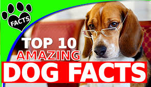 Dogs That Dont Shed And Smell by Animal Facts U2013 Page 2 U2013 Amazing Facts And Top 10s From The Animal