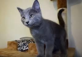 kitty cat gibbyson talking kitty cat wikia fandom powered by wikia