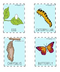 Our Butterfly Resources Are A Beautiful Addition To Your Thematic Unit Youll Find