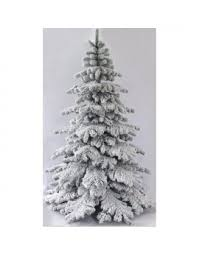 The Snow White Fir 5ft To 8ft