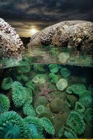 Decorator Crab Tank Mates by 2682 Best Aquatic Life Images On Pinterest Sea Slug Animals And