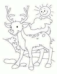 9 Pics Of Deer Hunting Coloring Pages