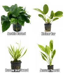 product categories plant bundles aquarium plants for sale