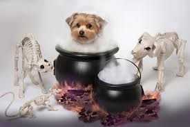 Old Westbury Gardens Dog Halloween by Long Island Dog Boarding